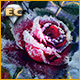 Living Legends Remastered: La Rose de Glace Édition Collector
